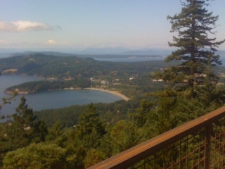 Ancient Fir Trees and View over the Canadian Gulf Islands